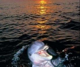 Aspra al delfino bianco