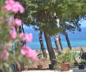 Pineta Sul Mare
